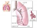 呼吸内科健康知识展示